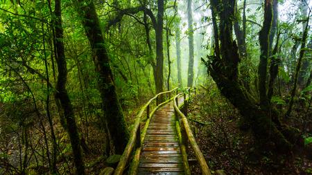 sotto la pioggia: ponte di legno di muschio in parco naturale sotto la pioggia