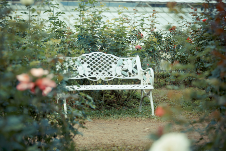 Chair in Rose flowergarden