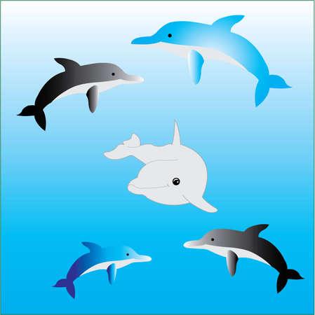 dorado: dolphin Illustration