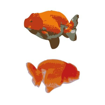 golden fish: golden fish vector