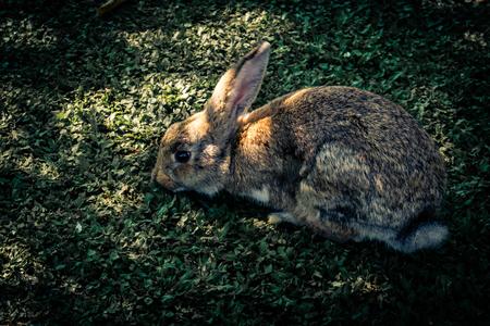 Rabbits and Shadow