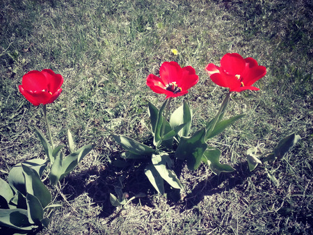Red flowers Reklamní fotografie
