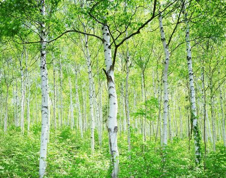 Forest Stock Photo - 231881
