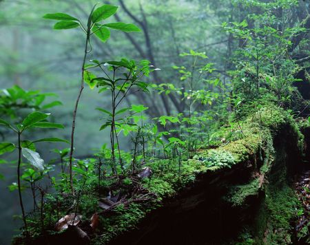 Forest Stock Photo - 231834