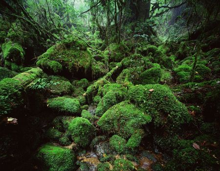 Forest Stock Photo - 231861