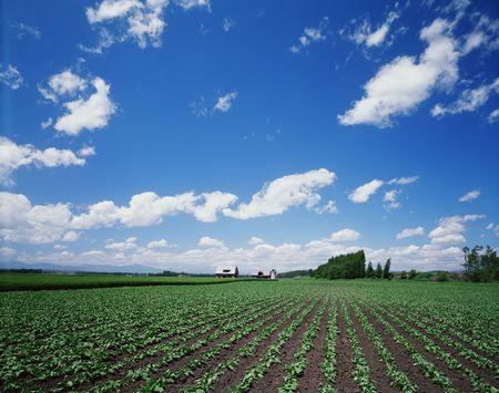 grasses: Field