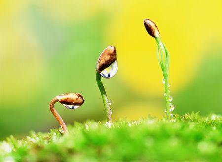 芽 写真素材