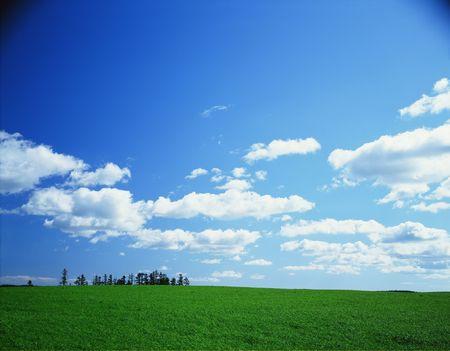 Nature View photo