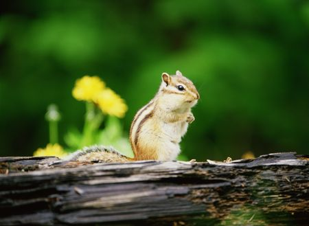 Squirrel Stock Photo - 266075