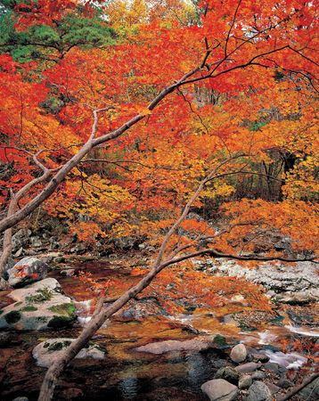 Autumn Clolors 版權商用圖片