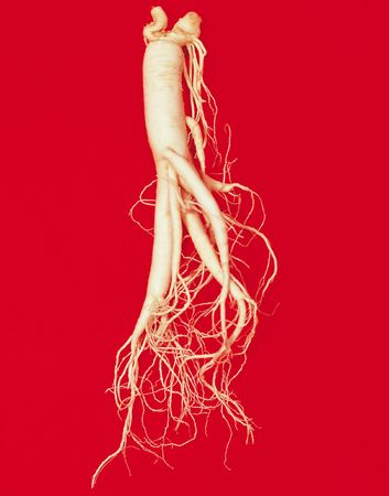 ginseng: Korean Ginseng Stock Photo