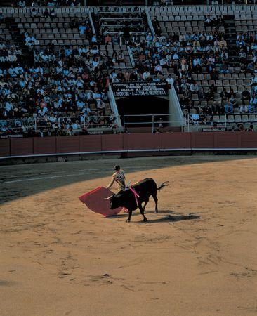 corrida de toros: Toros