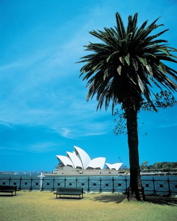 Sydney Opera House with Tree Stockfoto