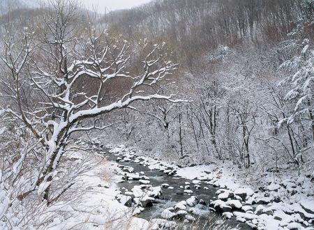 snows: Snows on Branch