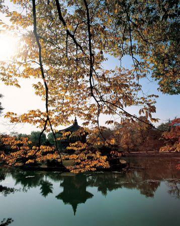 Tree and Lake Stock Photo - 406017