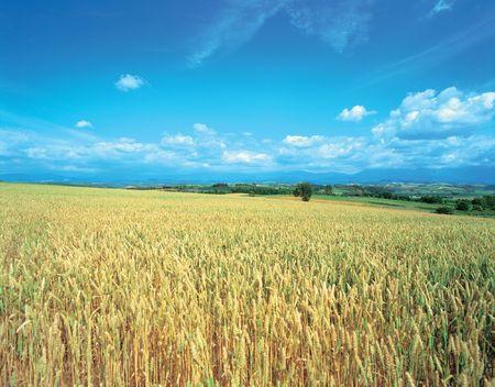 Crops of Plains photo