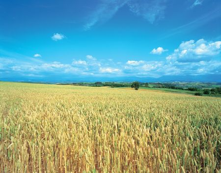 Crops of Plains Stockfoto