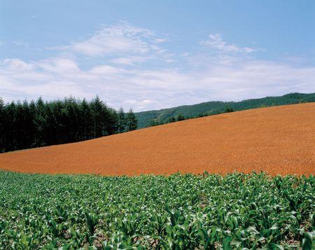 Recortar las colinas sobre las llanuras  Foto de archivo - 415594