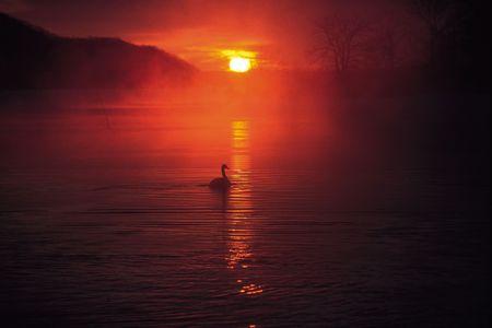 Sunlight Rise photo