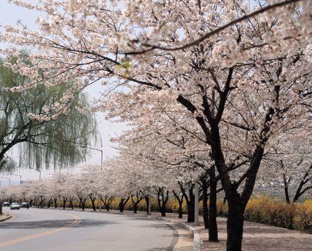 Flowers Tree Road photo