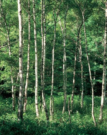 branchy: Branchy Forest Stock Photo