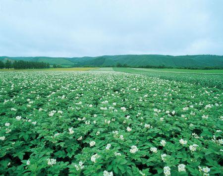 Flower Plains photo