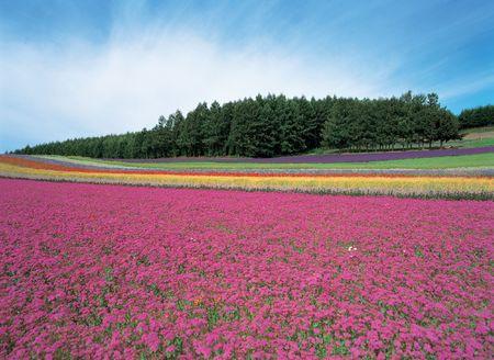 Flower Ground photo