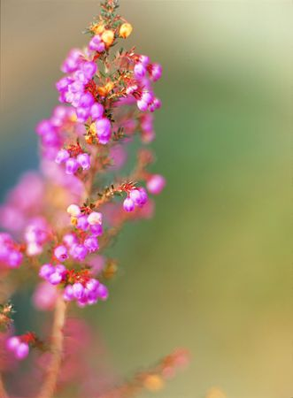 flores peque�as: Flores peque�as Foto de archivo