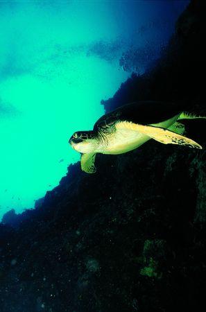 Turtle and Sea 版權商用圖片