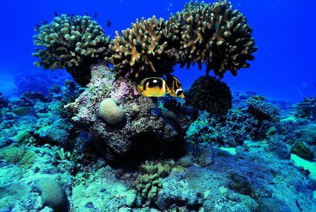 Fishes by Rocks 版權商用圖片