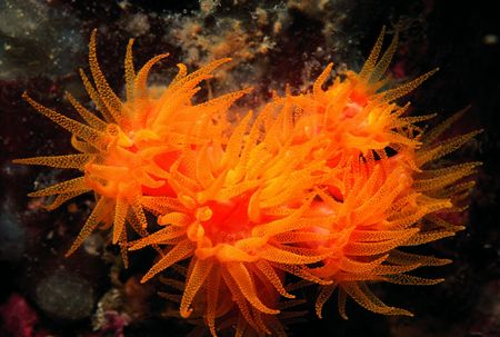 Moving Anemones
