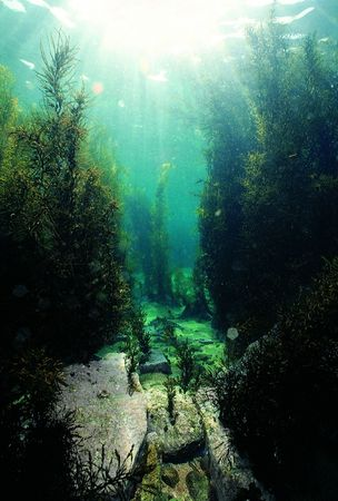 Forest in Sea