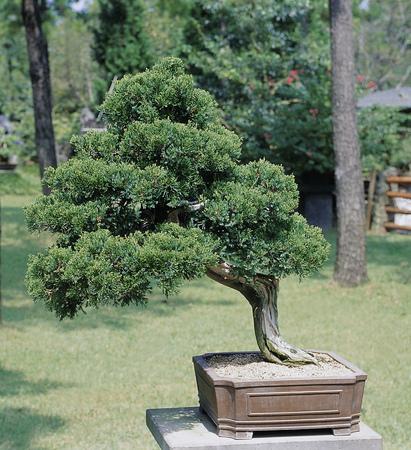 Wood Image Stock Photo