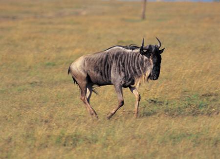 Animal Reklamní fotografie