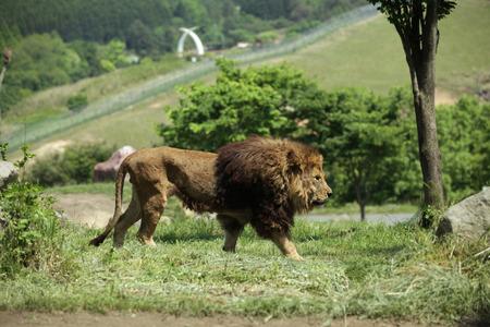 Animal Stock Photo