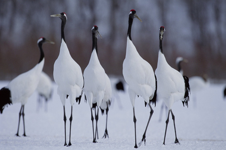 A group of bird