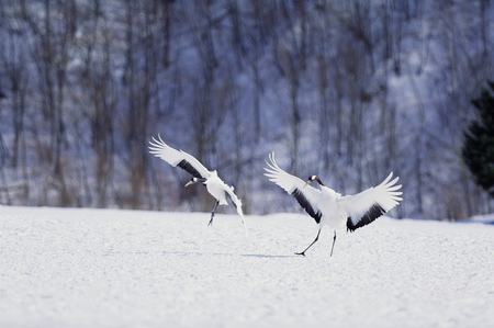 Birds on snow
