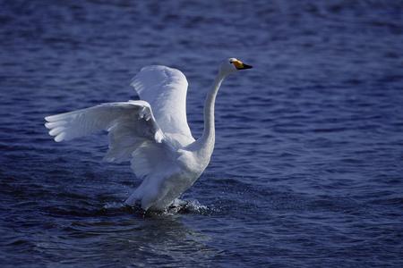 Birds on lake Stok Fotoğraf