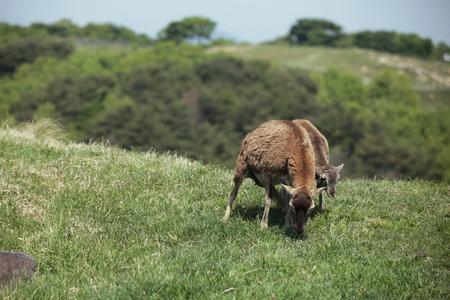 Animal Reklamní fotografie - 85656005