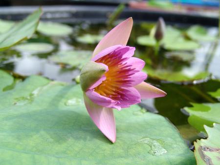 drop water: Flower