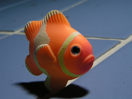 clown fish: Fish Stock Photo