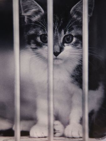 kitten on death row in shelter