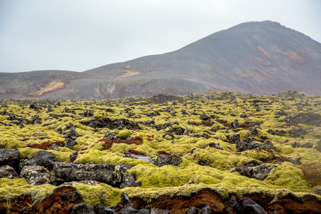Volcanic moss landscape with volcano in the background in iceland