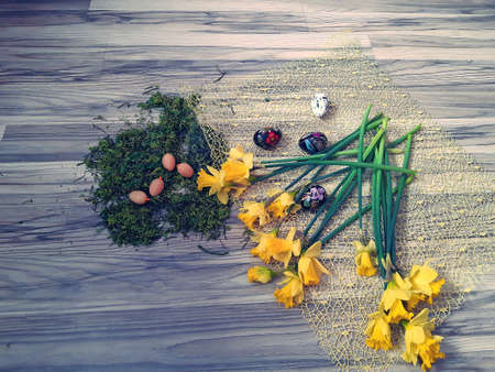 Polish daffodils spread out on a wooden countertop, next to the moss you can see Easter eggs, eggs and decorations