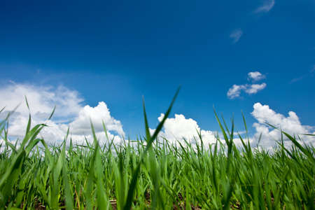 green grass meadow on blue sky background Stock Photo