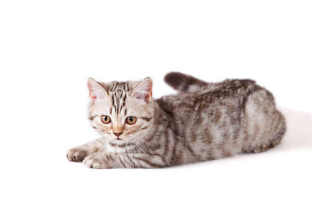 small striped kitten isolated on white Stock Photo - 9743534