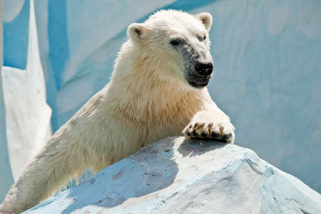 white bear climbing on stone photo