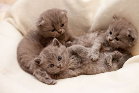 three kitten lying on white cloth Stock Photo