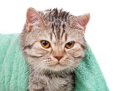 wet cat in green towel photo