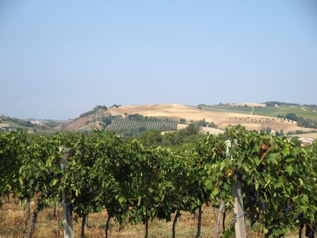 Vineyards and olive fields in Chianti, Tuscany Stock Photo - 6761435